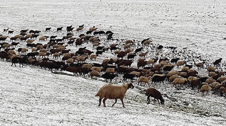 Karsın yükseklerine kar yağdı: Çobanlar zor durumda kaldı