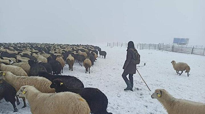 Artvin'de ani bastıran kar sürü sahiplerine zor anlar yaşattı