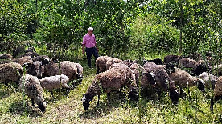 İstanbulda yöneticiliği bıraktı kendi çiftliğini kurdu: 100 koyunla başladı şimdi sayı 800e yükseldi