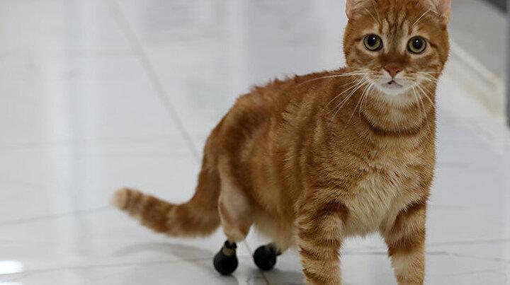 Sevimli kedi Pika için 3D yazıcı ile özel ayakkabı yaptılar: Artık eskisi gibi yürüyebiliyor