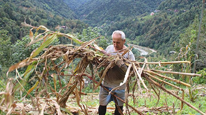 Ülkesine gidemeyince bahçe işlerine başladı: Myanmardan Rizeye