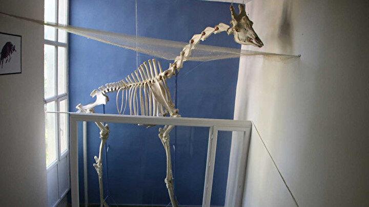 Elazığda 8 milyon yıllık hayvan fosilleri sergileniyor