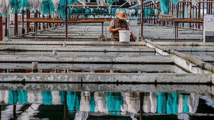 Antalyada 40 dönüm araziye kurdu: Türkiyenin çeşitli illerine gönderiyor