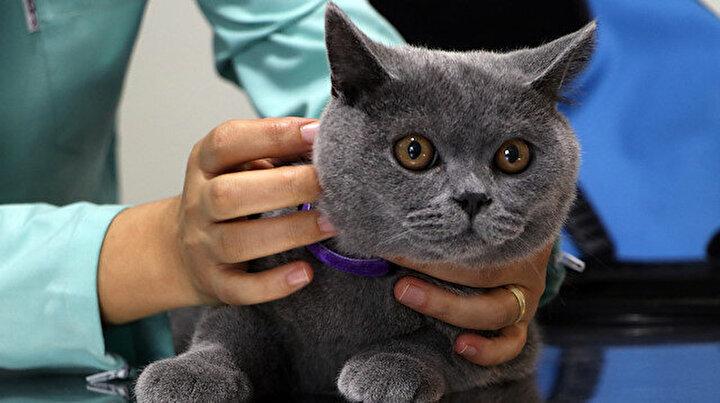Evcil hayvan sahipleri dikkat: Süre daralıyor, cezası 10 bin lira