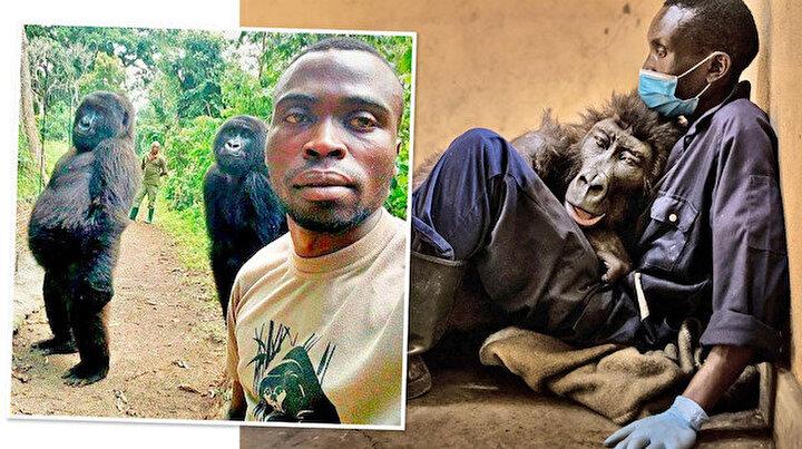 Fenomen goril Ndakasi sahibinin kollarında öldü