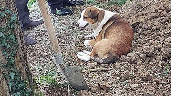 Düzcede duygulandıran görüntü: Ölen kargo görevlisi toprağa verilirken köpeği mezarın başından ayrılmadı