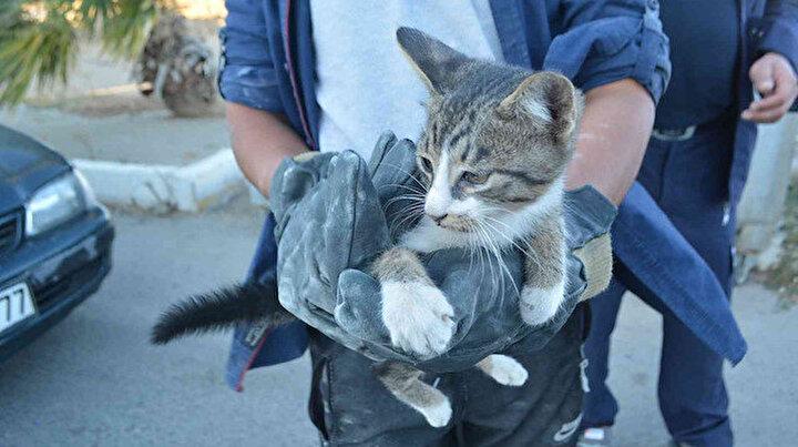 Cipte sıkışan kediyi çıkarmak için bir saat uğraştılar: Tedavi ettirip sahiplendiler