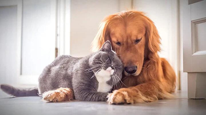 Evcil hayvan sahipleri dikkat: Köpekler 2021 kediler 2022 sonuna kadar çiplenecek
