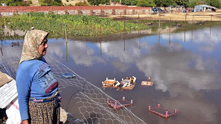 Muğlada şiddetli yağış: Tarım arazilerini su bastı, hayvanlar öldü