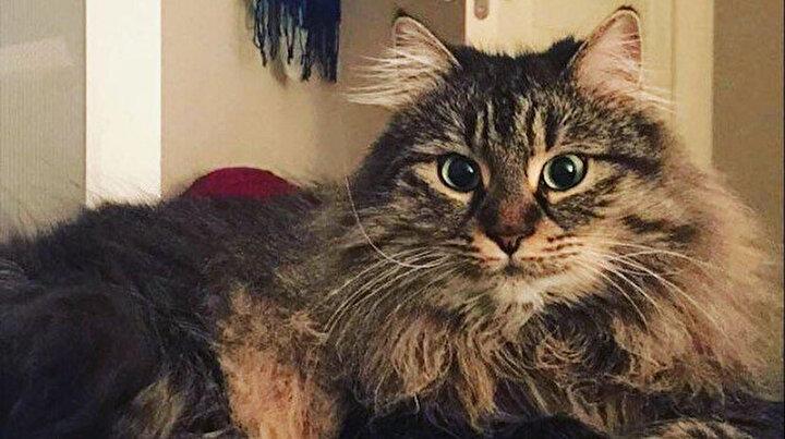 Mahkemeden kedilerin velayeti davasında emsal karar: Piraye ve Cingözün psikolojisi gözetildi