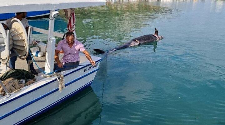 Antalya'da şoke eden olay: Kıyıya ölüsü vurdu 5 metre boyunda