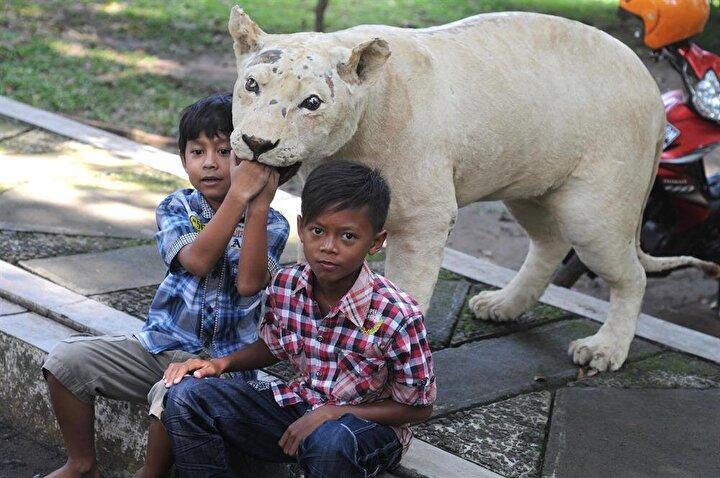 Nesli tükenme tehlikesiyle karşı karşıya olan hayvanları özel yöntemlerle doldurarak sergileyen Jurug Hayvanat Bahçesi, ziyaretçilerin yoğun ilgisini çekti.