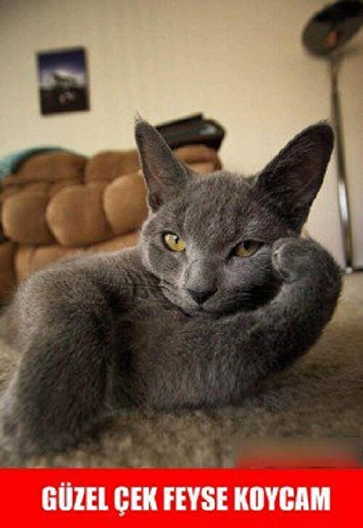 En Komik Kedi Capsleri Yeni şafak