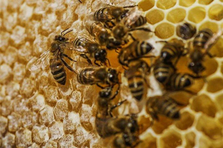 Arılarına çocukları gibi bakıyor