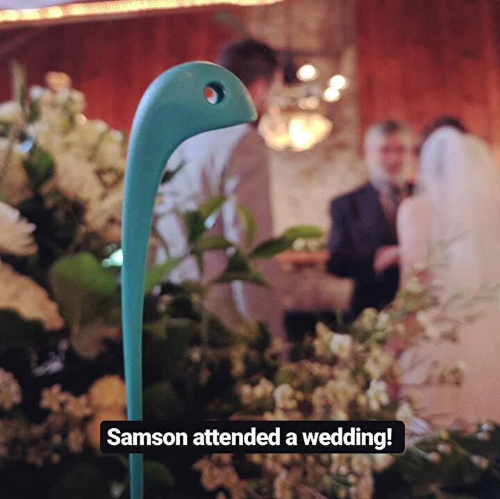 Samson düğünlere katılıyor