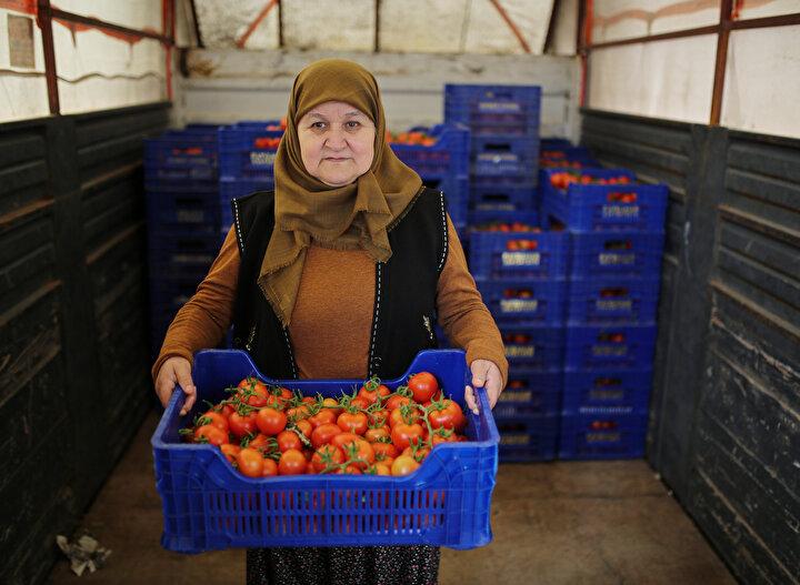 Cumhurbaşkanı Recep Tayyip Erdoğan, patates, soğan ve domates başta olmak üzere gıda fiyatlarında yaşanan aşırı artışın önüne geçmek üzere tanzim satış noktalarının kurulması talimatını vermiş, bunun üzerine başta büyükşehirlerde olmak üzere, üreticiden tüketiciye doğrudan gıda ürünü temini için oluşturulan tanzim satışı noktaları kurulmuştu.