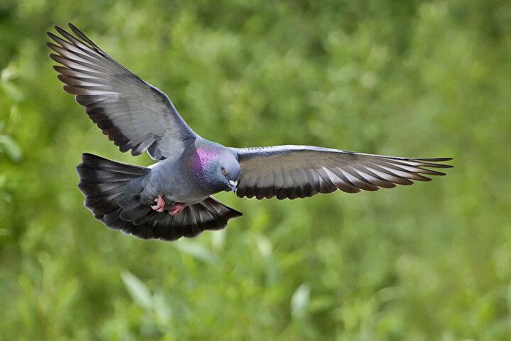 2013te bir leyleği yakalayan Mısırlı yetkililer, kuşun gagasında şüpheli bir paket taşıdığını söyledi. Ancak gagasındaki sadece bir etiketti. Fransız bilim insanlarının leyleklerin göç yolunu izlemek için taktığı bir etiket…