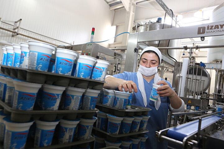 Çorumda küçük bir imalathanede yoğurt ve peynir üretirken Tarım ve Kırsal Kalkınmayı Destekleme Kurumundan (TKDK) hibe desteği alarak 2 milyon 500 bin liralık yatırım yapan Halil Demir, kurduğu modern tesiste ürettiği ürünleri Türkiyenin dört bir yanına gönderiyor.