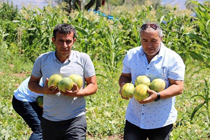 """SON YILLARDA EKİM ALANI ARTTI:Son yıllarda bağrıbütün kavununun ekim alanının daha da yaygınlaştığını söyleyen Kezban Karaca ise, """"Çiftçiler olarak biz de kazanmak istiyoruz. Daha önce çok az ekiyorduk, şimdi daha çok ekmeye başladık. 10 dönümden az ekmiyoruz. Taleplerde çok oluyor. Seneye daha fazla ekmeyi düşünüyoruz. Ankara ve İstanbul gibi illerden de talepleri bekliyoruz. Satışlarımız çok iyi"""" şeklinde konuştu."""