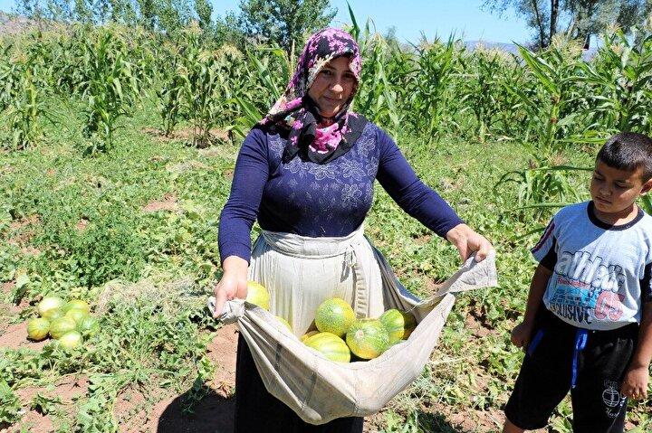 """HASADI BAŞLADI:Aydıncık Belediye Başkanı Ahmet Koçak da bağrıbütün kavununun ilçeye ait bir ürün olarak tescillenmesi için çalıştıklarını anlatarak, """"Bağrıbütün kavunu, yer muzu dediğimiz Aydıncık'a ait ilçemizde yöresel olarak yetişen bir ürünümüz. Bu günlerde hasat başladı. Vatandaşlarımız Aydıncık'ın her yerinde köy pazarından, çarşısından temin edebiliyorlar. Şu an için 2 ila 4 lira arasında kilosu gidiyor. 100 dönüm kadar geniş bir alana bu sene ekimi yapıldı..."""