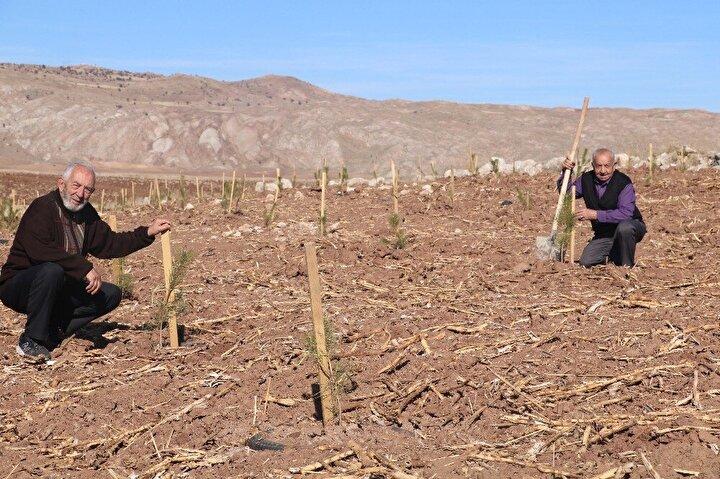 """Geçmişte köyde çeşitli alanlarda çok sayıda ağaç yetiştirdiğini belirten Akgül, """"Daha öncesinde biz ağaçlar diktik. Ama onlar bizim için çok önemli değildi. Nihayet suyu vardı, toprağı vardı gerekli olan bir çok şey vardı. Şuan içinde bulunduğumuz yerde ot bile bitmiyordu. Gelip giderken hep beni rahatsız etti burası. Arazinin ortasında hiçbir işe yaramayan bir yer. Ne yapalım derken, köydeki drenaj kanalları temizleniyordu ve çıkan toprağı koyacak yer bulamadılar. Aklıma hemen burası geldi. O toprağı buraya taşıtıp, taşıtamayacağımızı düşündüm. Orman işletmenin müdürü ile görüştüm. Dediler ki 1 metreye yakın toprak olursa ağaç biter. Buraya 2 dönüm alana bin 500 ton toprak taşıdık. Toprakları taşırken DSİden yardım aldık. Orman Fidanlık Müdürlüğünden fidan aldık. Bütün köylü toplandık, buraya bu fidanları diktik. Burada başarılı olduysak memlekette yapılmayacak hiçbir şey yok dedi."""