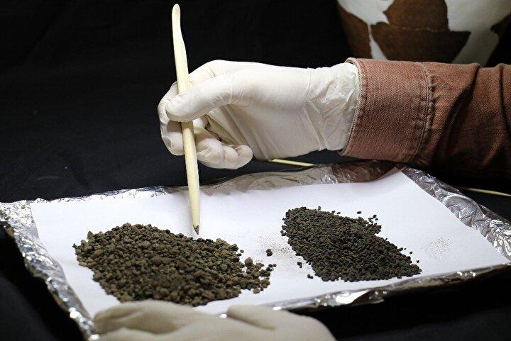Karbonize olmuş bir şekilde günümüze kadar korunarak gelmiş hububat kalıntılarının formundan yola çıkılarak şimdilik buğday oldukları düşünülmektedir. Bunun yanı sıra Arkeobotanik çalışmalar kapsamında, Hacı Bayram Veli Üniversitesi MAKLAB Laboratuvarı işbirliğinde uzman hocalarımız tarafından tür analizi çalışmaları devam etmektedir...