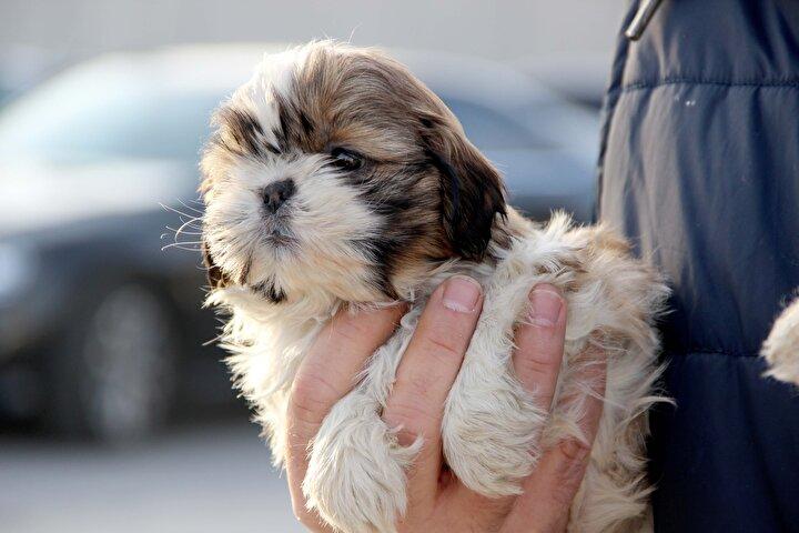 Kapıkulede karton kutularda 14 köpek yavrusu bulundu