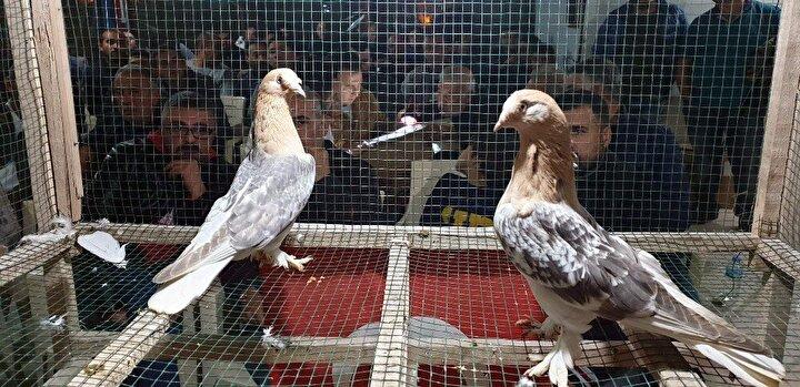 """Mezatı sunan yetiştirici Mehmet Hekim ise """"Ege Bölgesi'nin ilk süs tavukları ve güvercinleri mezatını gerçekleştirdik. Hobidaşlarımızı bir araya getirerek hem ırkların tanıtımını hem de eksiklerinin, fazlalıklarının aktarılmasını sağlamaktayız. Bugün Ege'nin dört bir yanından dostlarımızla birlikte her cinsten tavuk, güvercin çeşitleri görücüye çıktı. Özellikle Nazilli Dernek Başkanımız Murat Şimşek'in desteği bu etkinliklerde çok büyük oluyor. Alanın ve satanın memnun kaldığı mezatlarımız her hafta standart ve her ay da özel mezatlar olarak devam edecek"""" şeklinde konuştu."""