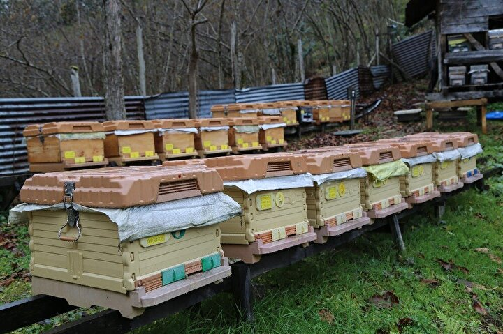"""Kafkas ırkı arıların gen merkezi Artvin  Artvin'in Arhavi ilçesine de arıcılık yapan Cemal Çorbacı 18 yıldır profesyonel olarak arıcılıkla uğraştığını ifade ederek, """"Türkiye'nin hiçbir yerinde olmayan flora ilimizde mevcut. Sıfırdan 3 bin rakıma kadar bal üretimi yapıyoruz. İlimizde dağlardan, yaylalarında yetişen şifa kaynağı çiçeklerinden arıların elde ettiği ballar ilaç niyetine tüketiliyor..."""