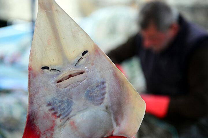 Karataşlı balıkçılar, ağları parçalayan insan yüzlü sapan balığının, toksini siyanürden bin 200 kat daha zehirli olan balon balıklarından ekonomik olarak daha zararlı olduğunu söyledi.