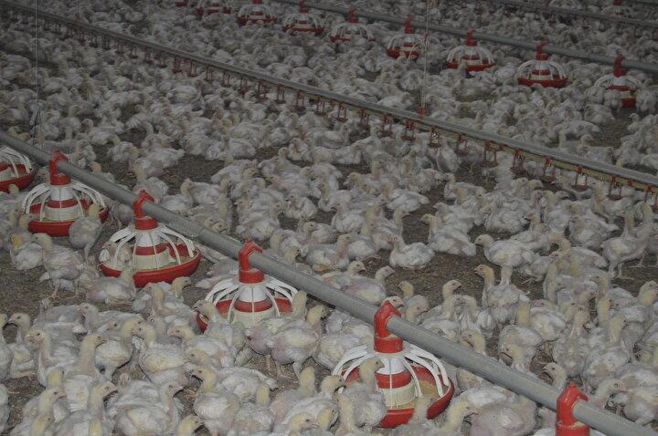 TKDK Afyonkarahisar İl Koordinatörü Zülgari Özdemir de 2014te et tavuğu yetiştiriciliği çiftliği projesi ile Sinanpaşa ilçesine 2 milyon 250 bin liralık yatırım yapıldığını vurguladı.