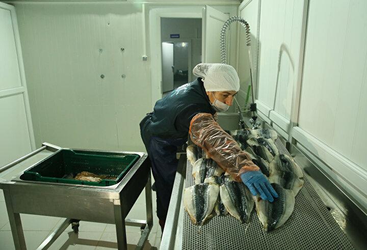 Avrupaya balık döner ihraç edilecekaPazar arayışına yeni başladıklarını belirten Altınsoy, Balık dönerde asıl hedefimiz ihracat. Bu konuda gerekli denetimler tamamlandı. Çok kısa süre içinde ihracata başlayacağız. Çekya, Almanya, Hollanda gibi ülkelerden teklif var. Türkiyede balık tüketimi Avrupaya göre çok az. Bu yüzden Avrupadan daha büyük bir pay alacağımızı düşünüyorum. Hedefimiz bu ürünü bütün dünyaya yedirmek. dedi.