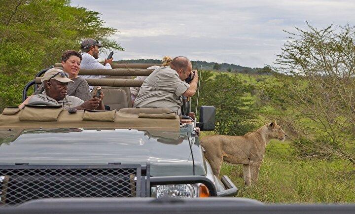 Bir süre dinlenen yaban hayatı fotoğrafçıları, saat 15.00te safarisi turunun ikinci aşaması için milli parklarda gezilerine kaldıkları yerden devam ediyor. İsteyen gezisini gece saatlerde de sürdürebiliyor.