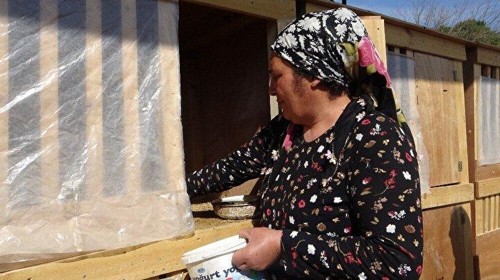 Türkmen ailesinin 500 horoz ve yaklaşık bin civciv ile Adananın Kozan ilçesinde gerçekleştirdiği yatırım, görenleri şaşırtıyor.