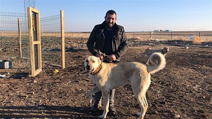Şu anda 2 erkek 3 dişi toplam 5 köpeğinin olduğunu, bunlardan yavru alıp üretim yaptığını ifade eden Tarkan Kaya, Türkiyenin birçok yerine yavru gönderiyoruz. Bu köpekler insana asla zarar vermezler. Ama tehlikeli bir durumu da her şekilde sezerler. Bunlar sürü köpeğidir ifadelerini kullandı.