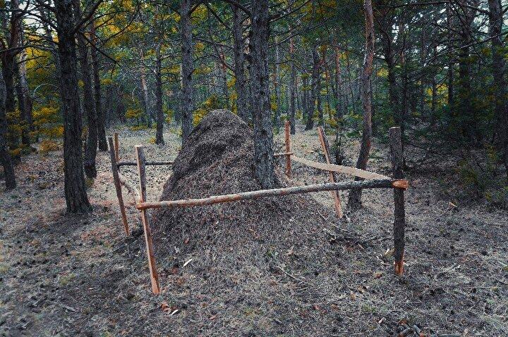 """Yuvayı ilk kez görüp yetkililere bilgi veren Yavu Orman İşletme Şefliği çalışanı Murat Yöntem, """"Bu ormanda da başka ormanlarda da büyük karınca yuvaları görmüştüm. Ancak bu kadar büyük bir yuva ile ilk kez karşılaştım. Yetkililere haber verdim. Şefimiz gelip inceleme yaptı. Müdür bey gelip kendisi de gördü. Kokuma altına alındı.Bu yuvadan çıkan bir gaz var, köy sakinleri gelip bu gazı soluyarak astım ve bronşit rahatsızlıklarına şifa bulduklarını düşünüyor"""" dedi."""