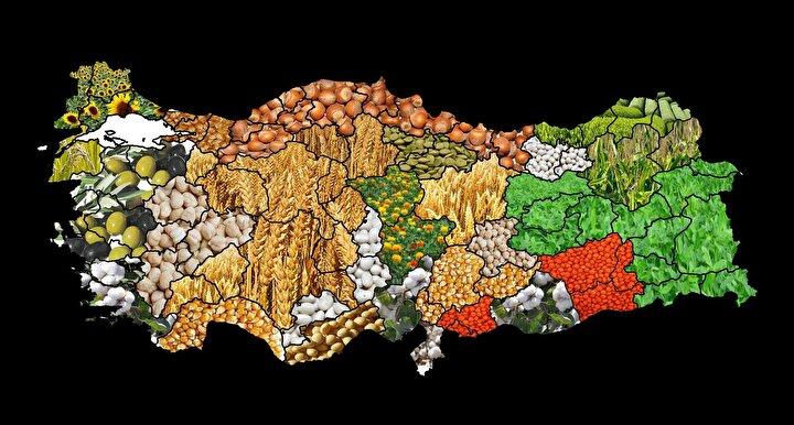 İşte Türkiye İstatistik Kurumu (TÜİK), Bitkisel Ürün Denge Tabloları, 2018-2019 verilerine göre Türkiyede üretilen ürünlerin iç talebi karşılama oranları...