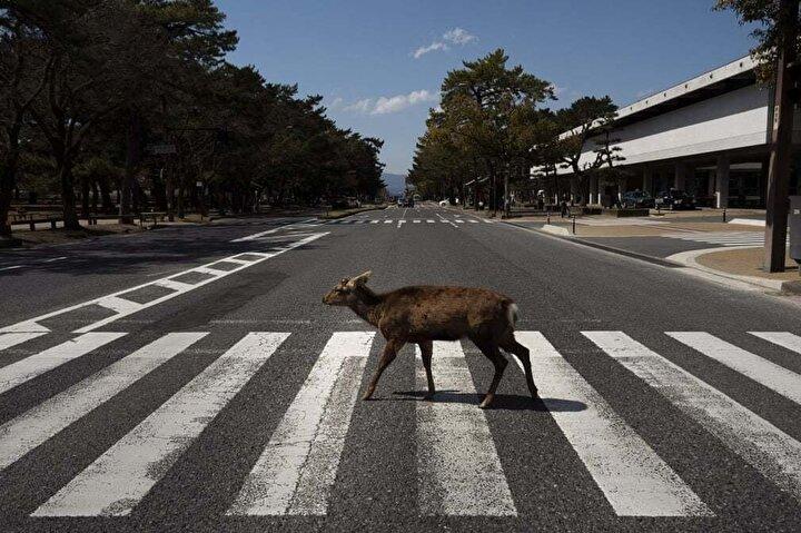Nara, Japonya Fotoğraf: Jae C Hong/AP