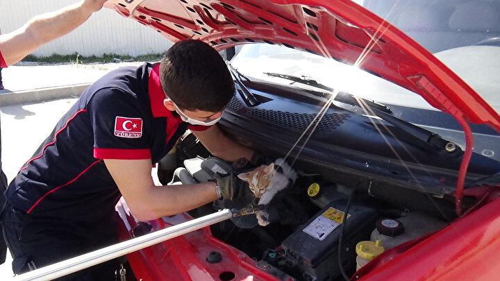 Otomobilin motorundan çıkarılan kedi,itfaiye aracının motoruna girdi