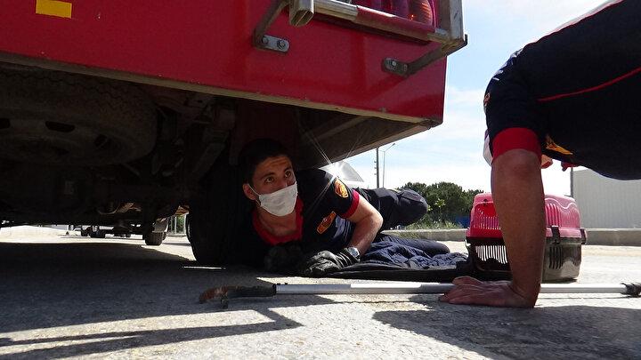 Olay yerine gelen itfaiye ekibi, otomobilin motor ve alt kısmında kediyi aramaya başladı. Kedi ise kendisini kurtarmak isteyen görevlilerden sürekli kaçtı.