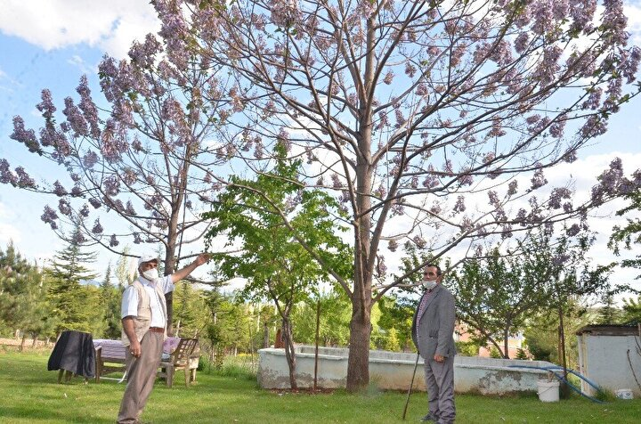 """Mahalle sakinlerinden Yahya Marangoz ise, """"Mustafa ağabeyimizin bahçesindeki ağacın çok farklı çiçekleri ve güzel bir kokusu var. Biz de araştırdık Elbistan'da böyle bir ağaca rastlamadık. Medine'den gelen kokuları andıran bir kokusu var. Oturup çay içiyoruz, sohbet ediyoruz. Güzel bir şey olmuş. Bu güzelliğin köyümüzde olması da ayrı bir mutluluk"""" dedi."""