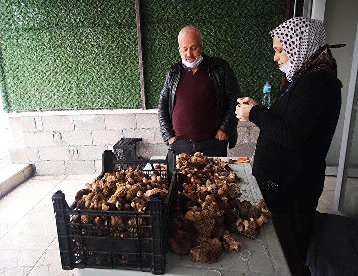 Çameli ilçesinde girişimci İsmail Karaca, ilçede yetişen kuzugöbeği mantarını kurutup, ipe dizerek yurt dışına satmaya başladı.