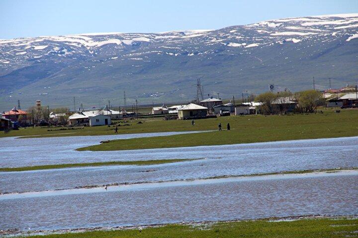 Öte yandan suların yükselmesi sonucu ovada oluşan adacıkta otlamaya devam eden atlar ve inekler dikkat çekti.