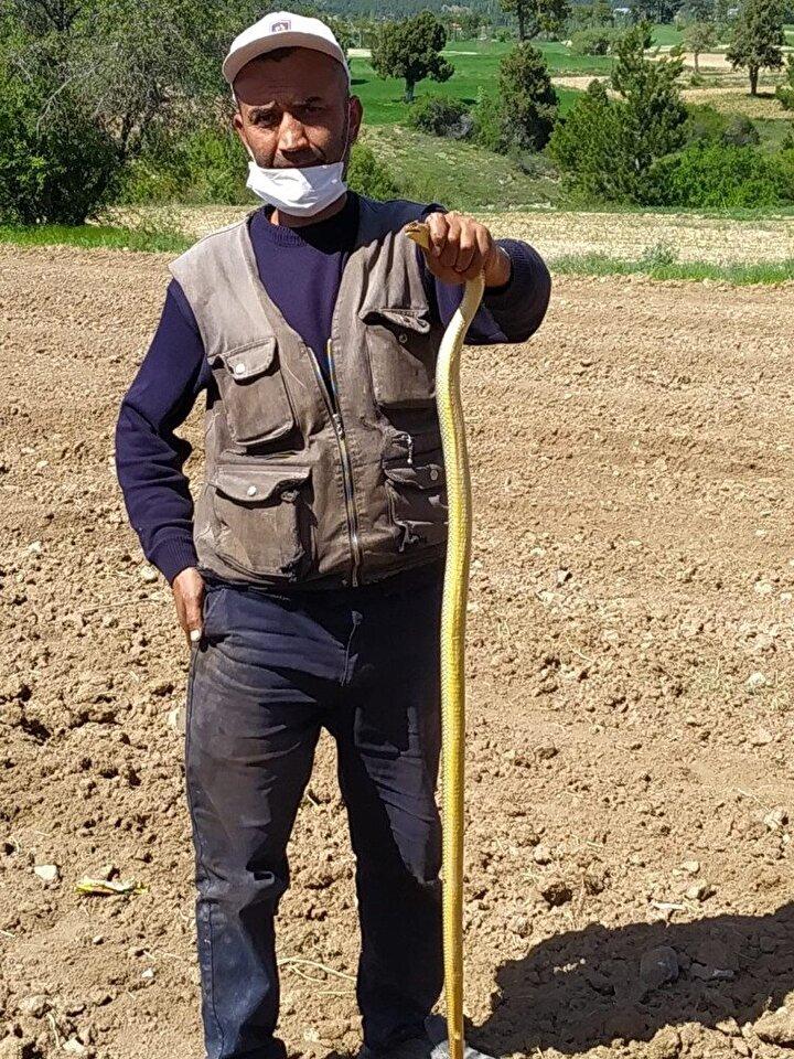 Sert ,1.5 metre uzunluğundaki bozyürük türü yılanı bir süre sonra doğaya saldı.