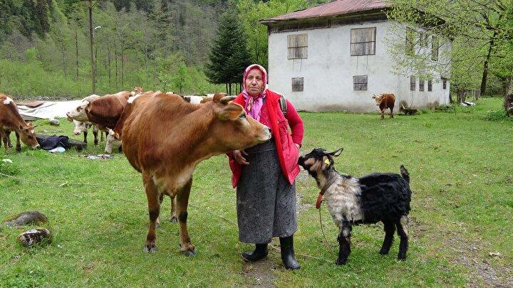 Özellikle hayvanlarını otlatmak amacıyla yaylalara çıkanlar, buralarda kaldıkları süre içerisinde hem kış aylarında tüketecekleri süt ürünlerini elde ediyor hem de hayvanlarının tüketeceği otları biçiyor.