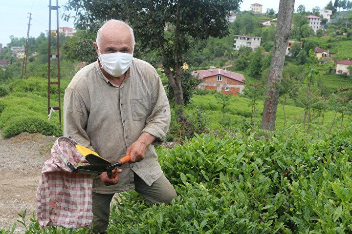 """Berk Şamlı ise """"Anne, babama yardım etmek hem de çayımıza sahip çıkmak için bu yıl ben de çay bahçesine girdim. Bölgenin geleceği çay ve bu tarımı hep birlikte yaparak sürdüreceğiz"""" dedi."""