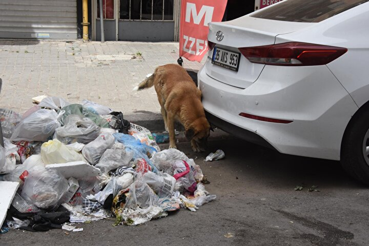 Mahalleli Selami Özden (38) ise, Doğrusunu söylemek gerekirse belediye işini yapmıyor. Bu insanlara yazık değil mi? Bu çöpler, başlı başına bir hastalık. Kimse kokudan dolayı pencere açamıyor. Daha önce aradık ama kimse gelmedi. Bunun adı rezillik dedi.