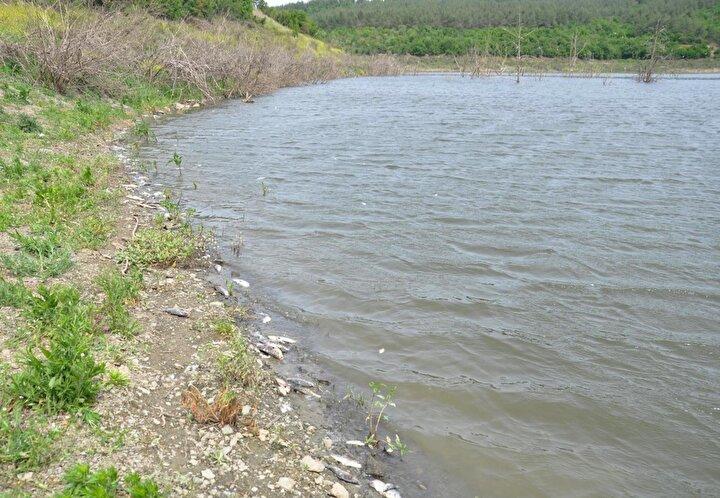 Barajdaki balık ölümlerinin nedeni sudaki oksijen değerinin düşmesi