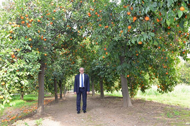 Antalya Valisi Münir Karaloğlu, geçen hafta yaşanan Afrika sıcakları ile sonrasındaki fırtınanın, narenciye ve zeytin başta olmak üzere çiftçiye büyük zarar verdiğini söyledi. Antalya Tarım ve Orman İl Müdürü Gökhan Karaca, zararın yüzde 25-30 civarında olduğunu aktardı.