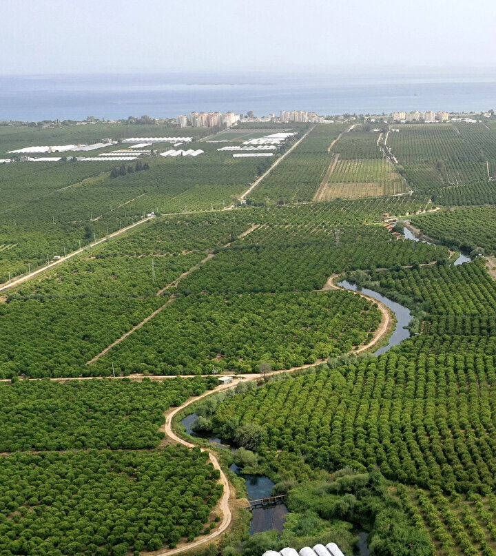 """Antalya Tarım ve Orman İl Müdürü Gökhan Karaca, Afrika sıcaklarının özellikle portakal ve Washington türü portakalda meyve dökülmesine yol açtığını belirterek, """"Bu dönemde son 75 yılın en sıcak günleri yaşandı ve bölgelere göre değişmekle birlikte portakal ve narenciye bahçelerinde ortalama yüzde 25-30 civarında zarar sözkonusu. Ekiplerimizin zarar tespit çalışmaları devam ediyor diye konuştu."""